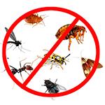 Средства от муравьев, тараканов, клопов